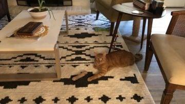 La ilusión óptica de una foto de un gato que se ha vuelto viral