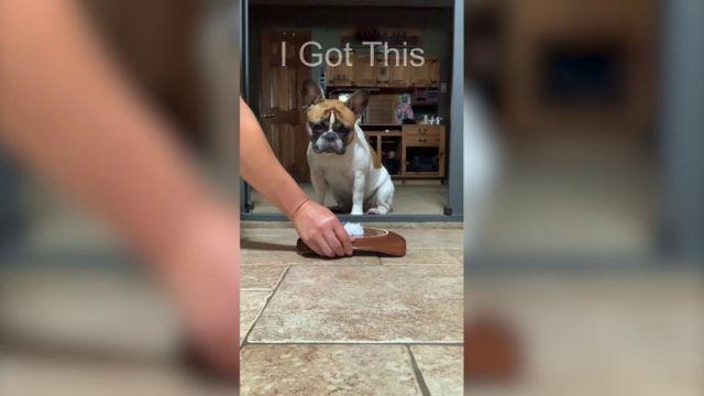 VÍDEO: Un perro intenta engañar a su dueño mientras hacía un reto viral y sale mal