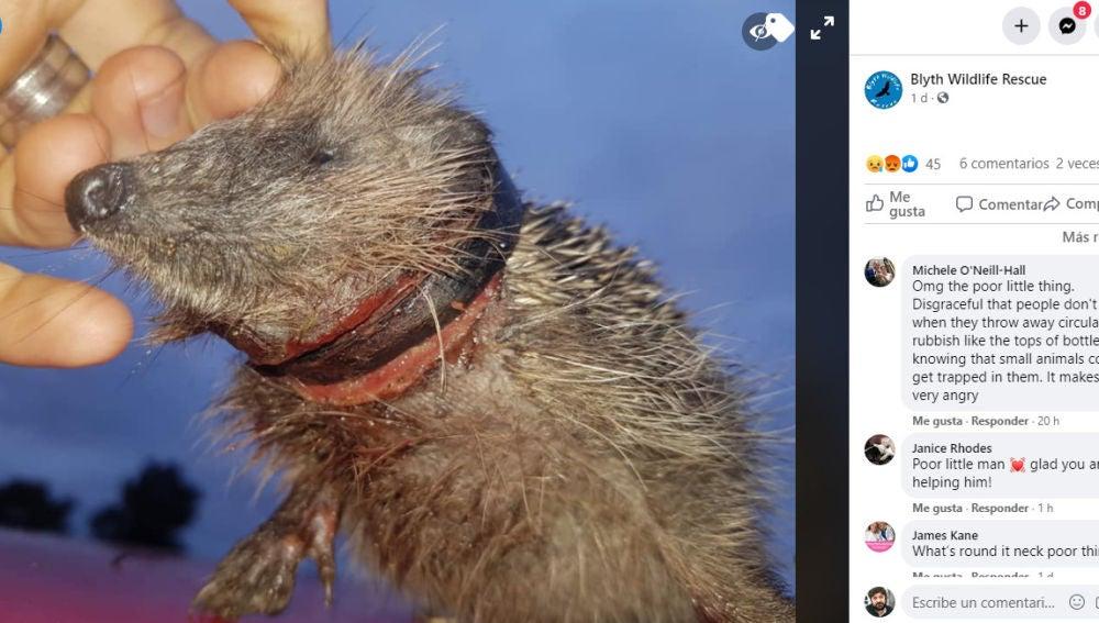 Facebook de Blyth Wildlife Rescue