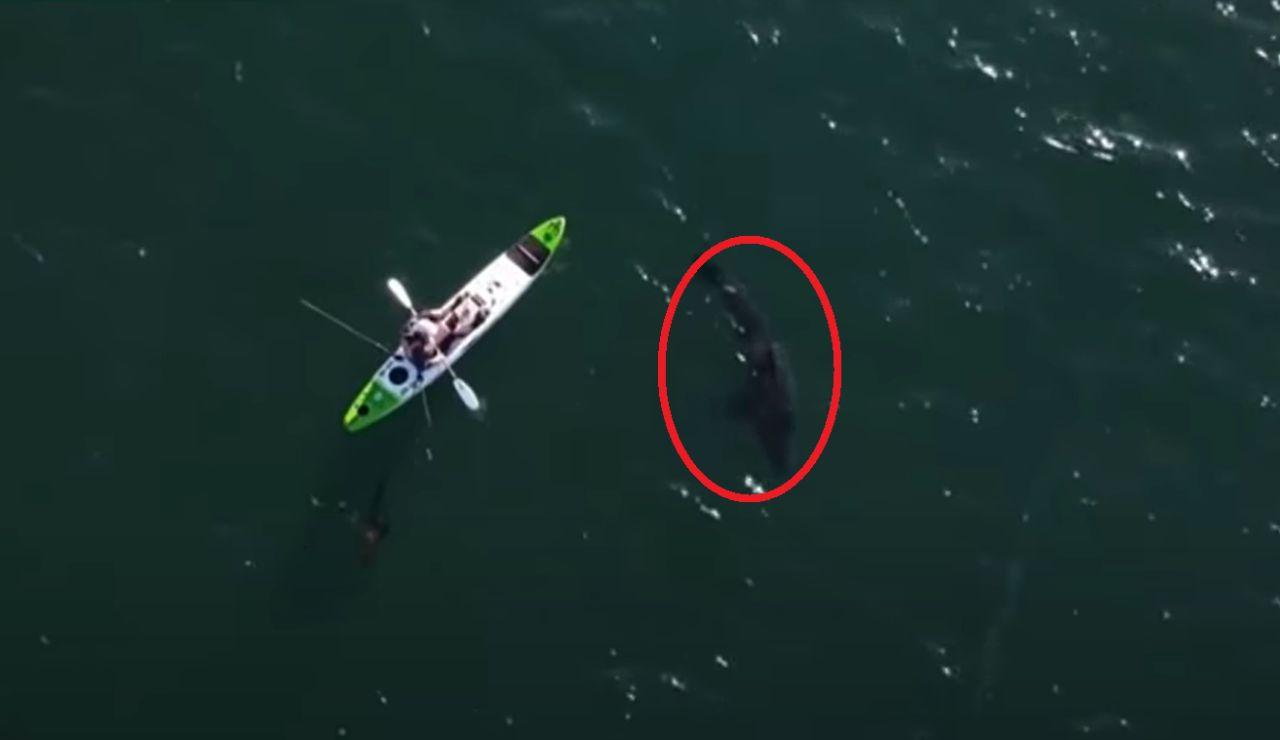 La terrorífica persecución de un tiburón blanco a un pescador que iba en kayak en Australia
