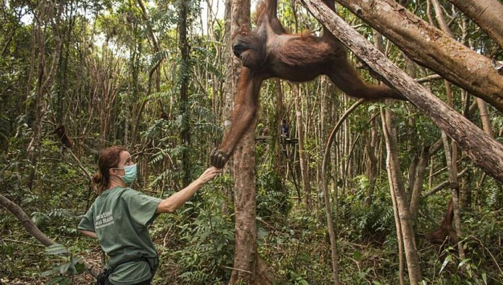 """Karmele Llano, la 'Jane Goodall' española que protege a los orangutanes: """"Te entienden con una mirada"""""""