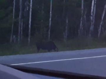 VÍDEO: Graban a un extraño fantasma parecido a Gollum saliendo de un bosque en Canadá