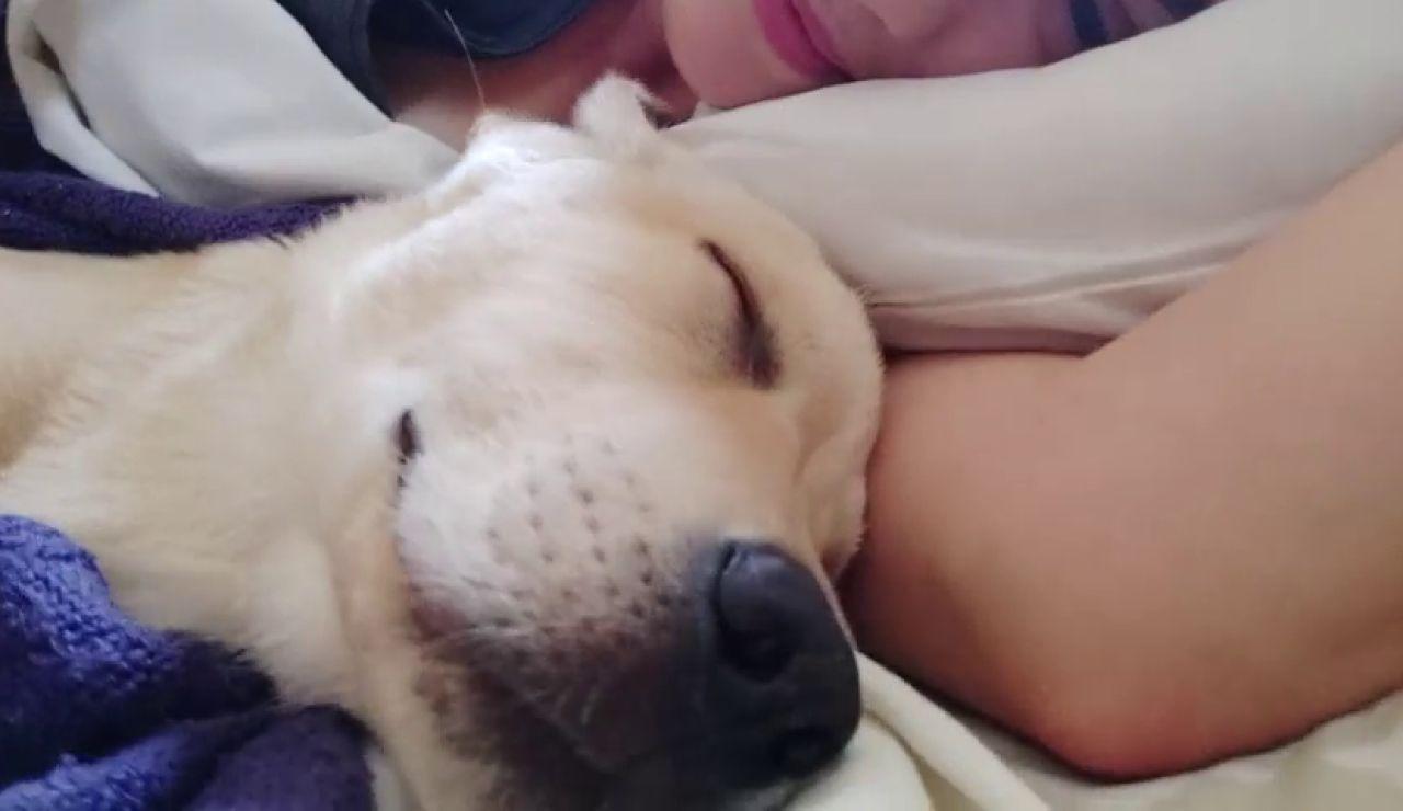 VÍDEO: Así sueña un perro mientras duerme