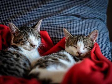 Día del Gato 2020: 10 curiosidades y cosas increíbles que hacen que amemos a estos felinos