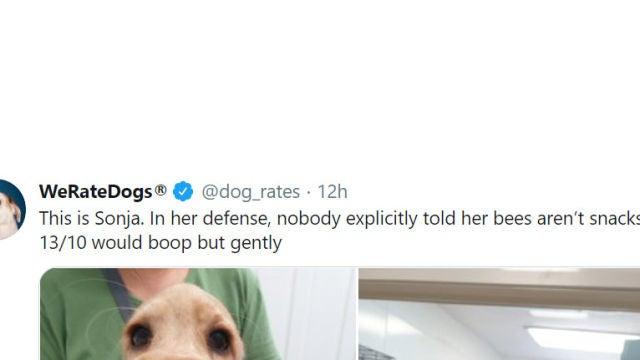 Tuit de @dog_rates