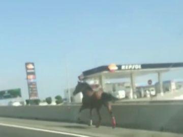 Carrera al galope de un caballo desbocado por una autopista de Gran Canaria
