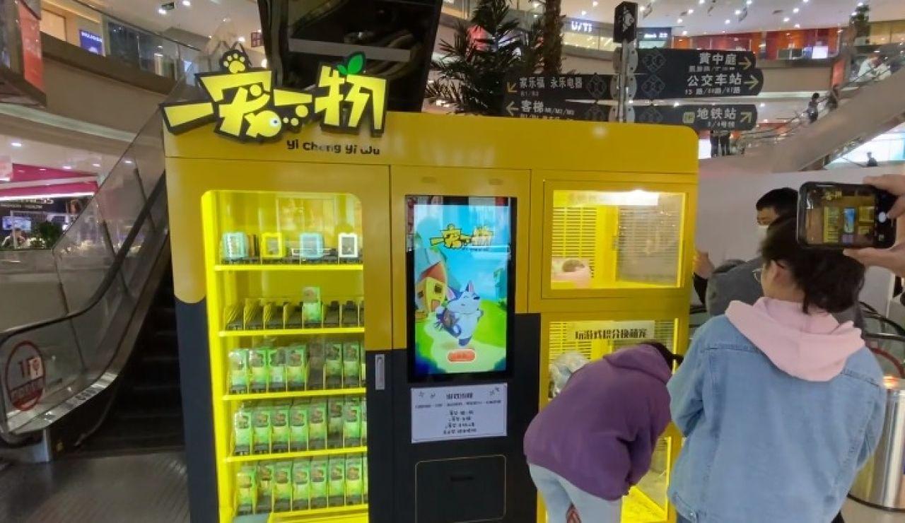 La macabra máquina expendedora de crías de gatos y perros en un centro comercial de China