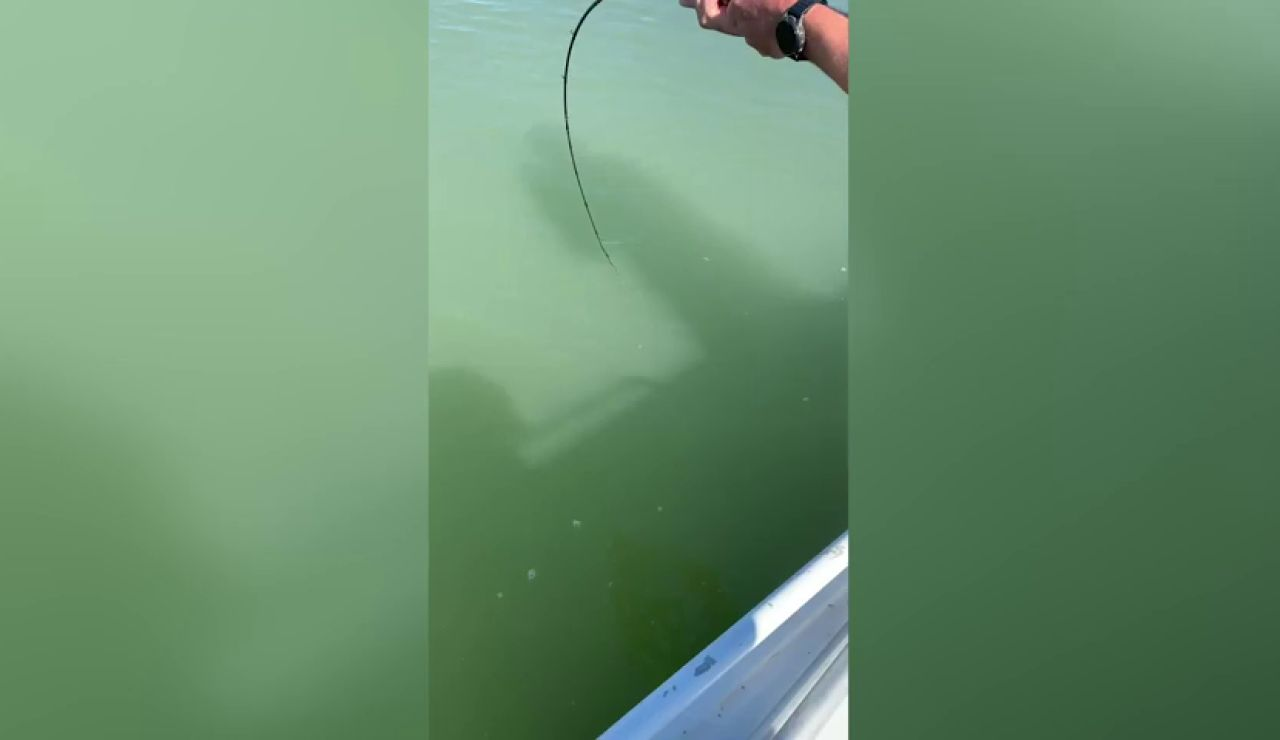 VÍDEO: Pescador accidentalmente recoge un cocodrilo gigante que se negó a soltar el hilo
