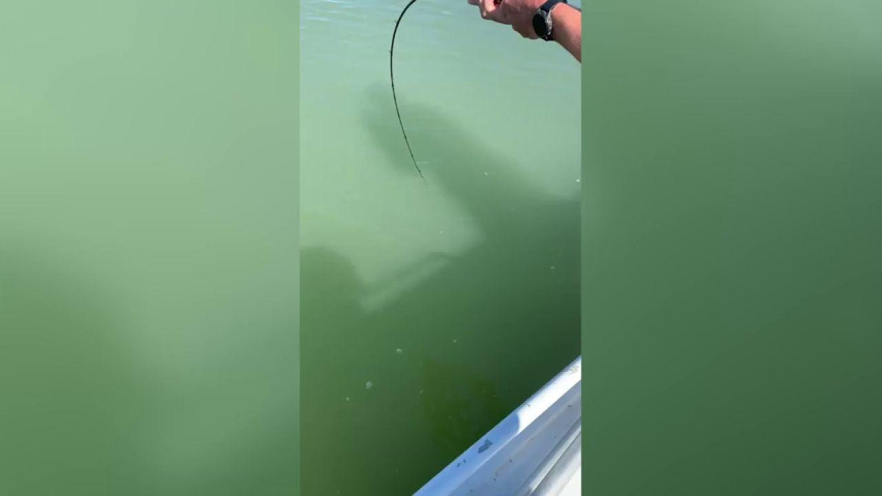 Ca/ña de Pescar Pesca de Rod Rocky Rocky varilla de carbono Super Hard luz larga distancia de pesca del bastidor de la secci/ón larga de posicionamiento Rocky Gu/ía de Rod gran anillo ca/ña de pescar Ca/ña