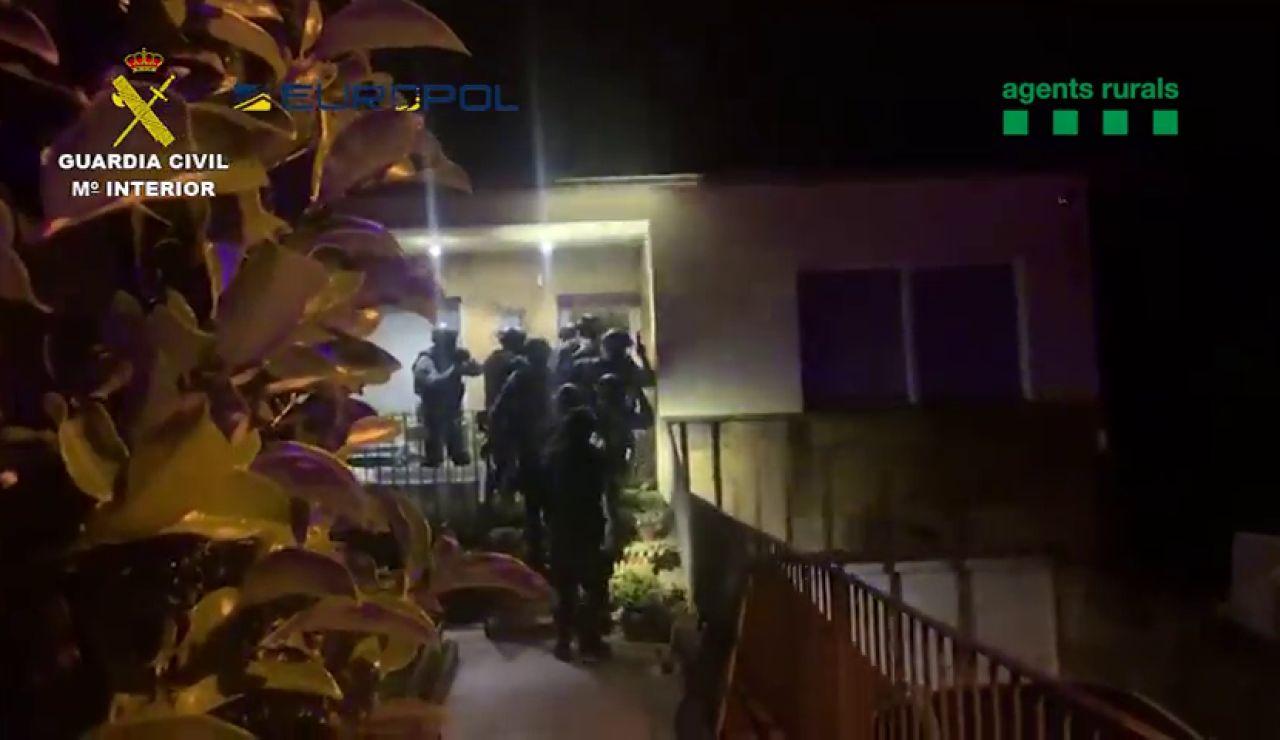 """Así desarticula la Guardia Civil una red dedicada al tráfico ilegal de reptiles en Cataluña: """"¡Todos al suelo!"""""""