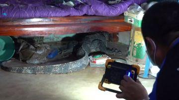 VÍDEO: Un gigantesco lagarto destroza una casa en Tailandia