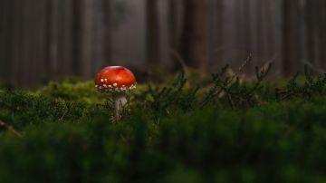 Setas en un bosque