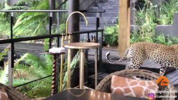 VÍDEO: Estaban cenando en un restaurante cuando un leopardo les dió el susto de sus vidas