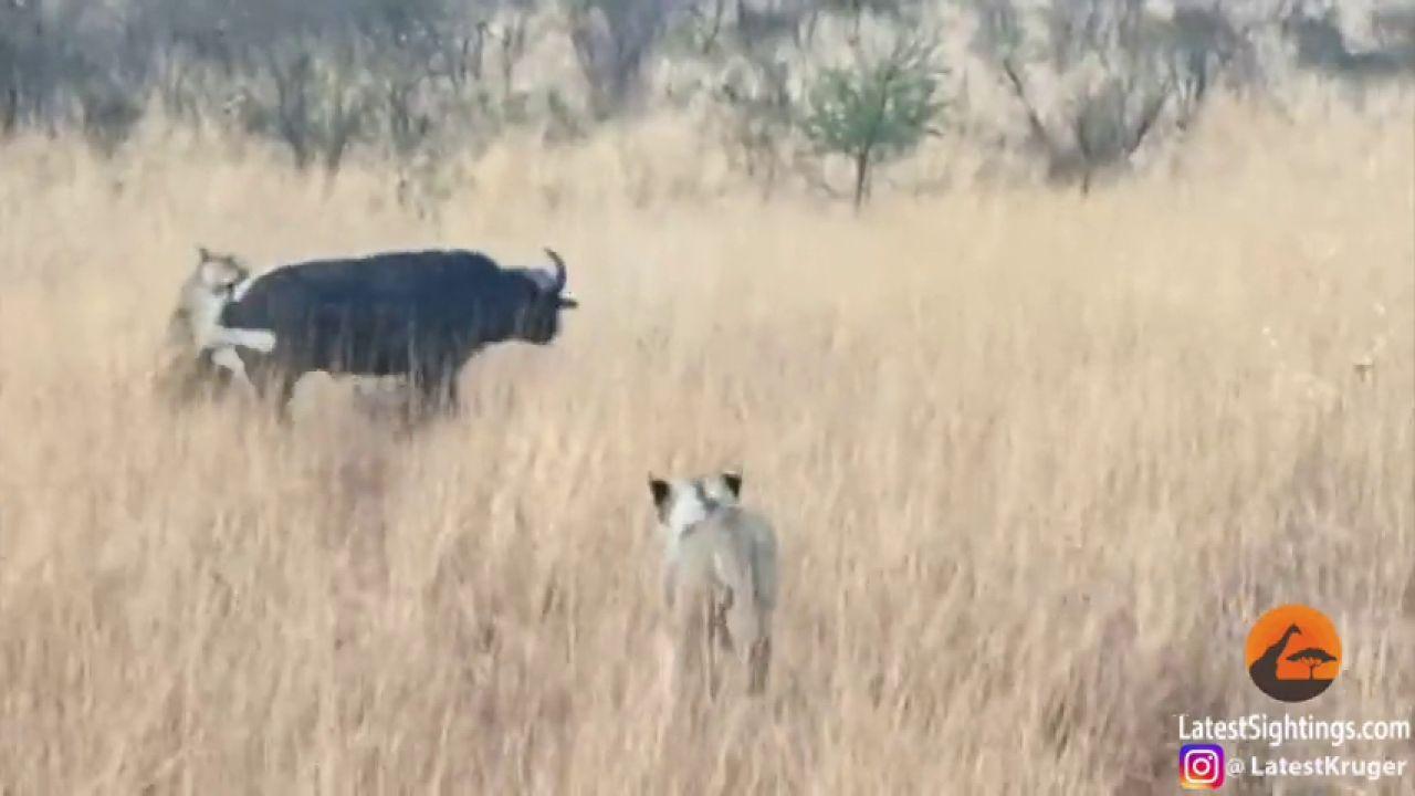 Naturaleza salvaje: Los vídeos de animales más impactantes - cover