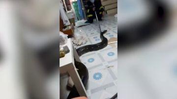 VÍDEO: Una pitón da a una familia el susto de su vida después de colarse en el salón de su casa