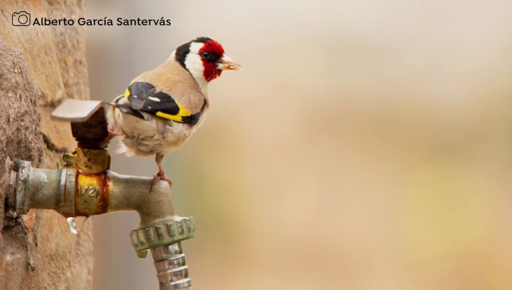 Calendario Seo/Bird life