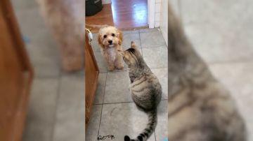 VÍDEO: Un cachorro pide ayuda a un perro para defenderse de un gatito