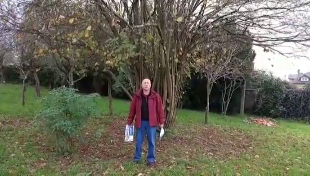 El mensaje de desesperación de un vecino que pide que le retiren un nido de velutinas al lado de su casa