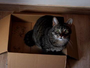 Los gatos y las cajas de cartón