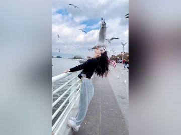 Turistas chinos dejan que gaviotas coman pan de su boca en el vídeo más raro que verás en mucho tiempo