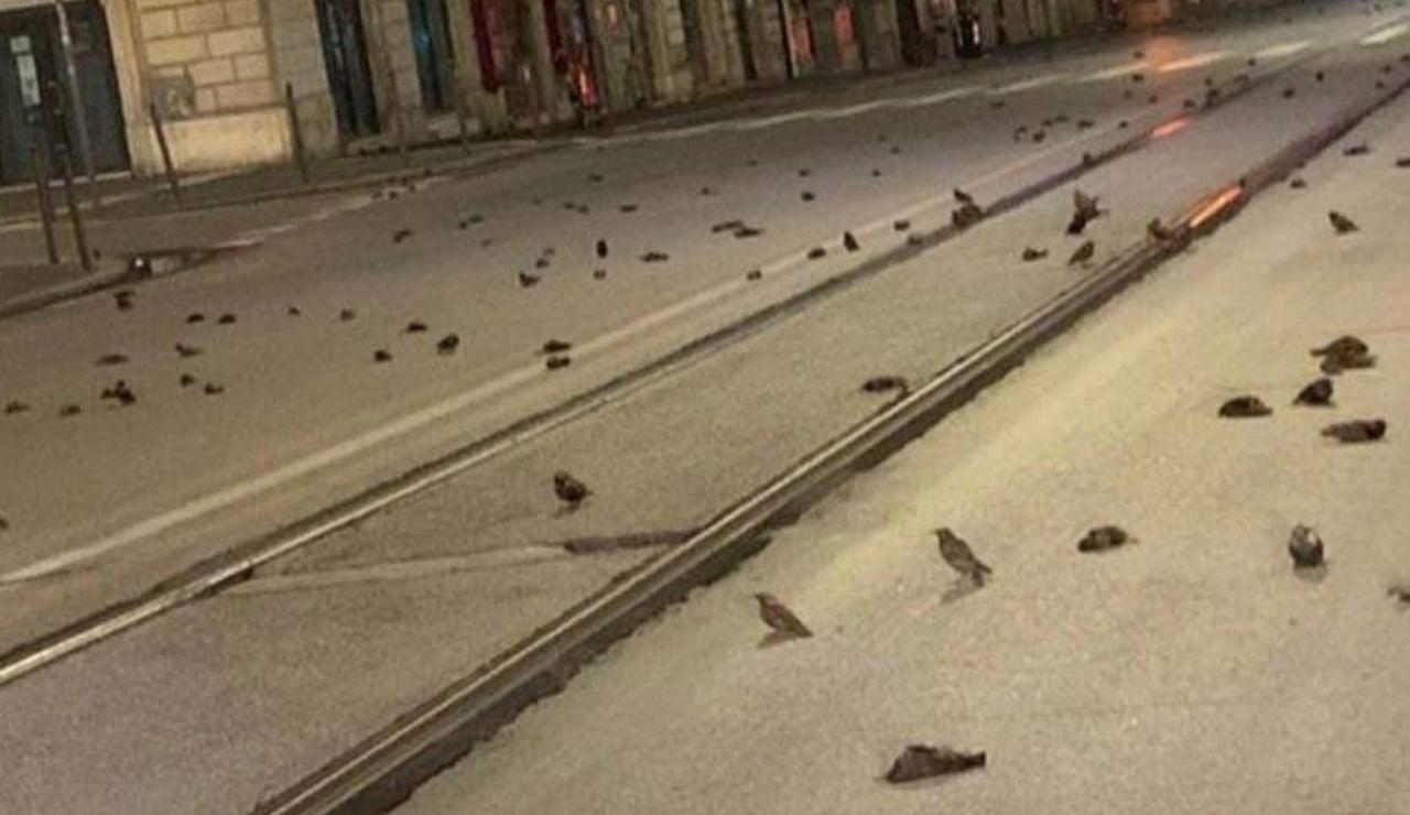 Pájaros muertos en Italia por la pirotecnia el día de Nochevieja