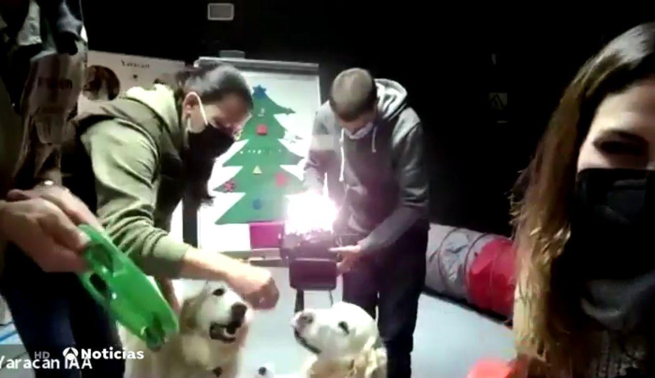 Terapias online con perros para niños con problemas cognitivos durante la pandemia del coronavirus