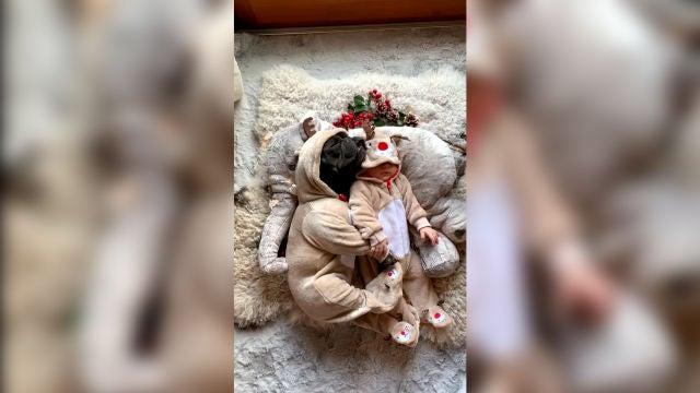 Bulldog francés duerme con su amigo bebé