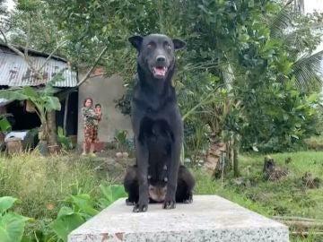 Mino, la perra que no se separa de la tumba de un niño de dos años ahogado en Vietnam