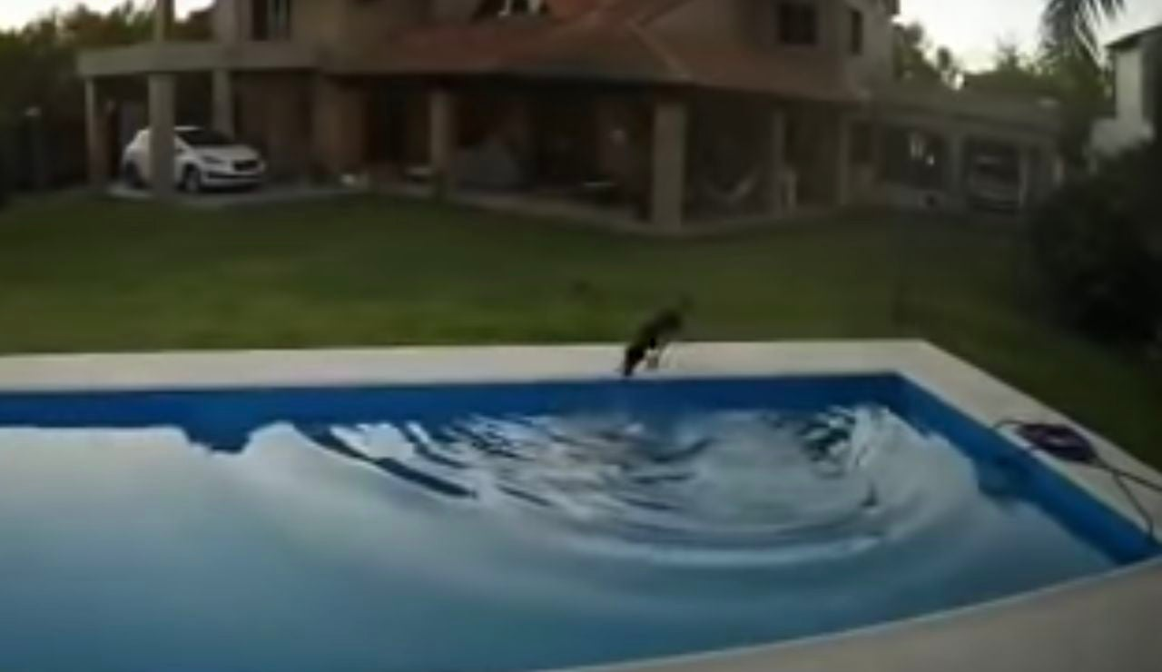 Una perra rescata a su compañera ciega de la piscina