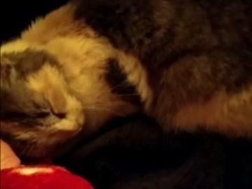 Adoptan a la gata que fue lanzada por un barranco al ritmo de 'Gato volador'