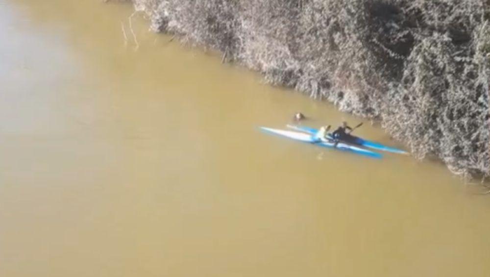 Dos piragüistas rescatan a un hombre que se lanzó al río Pisuerga en Valladolid