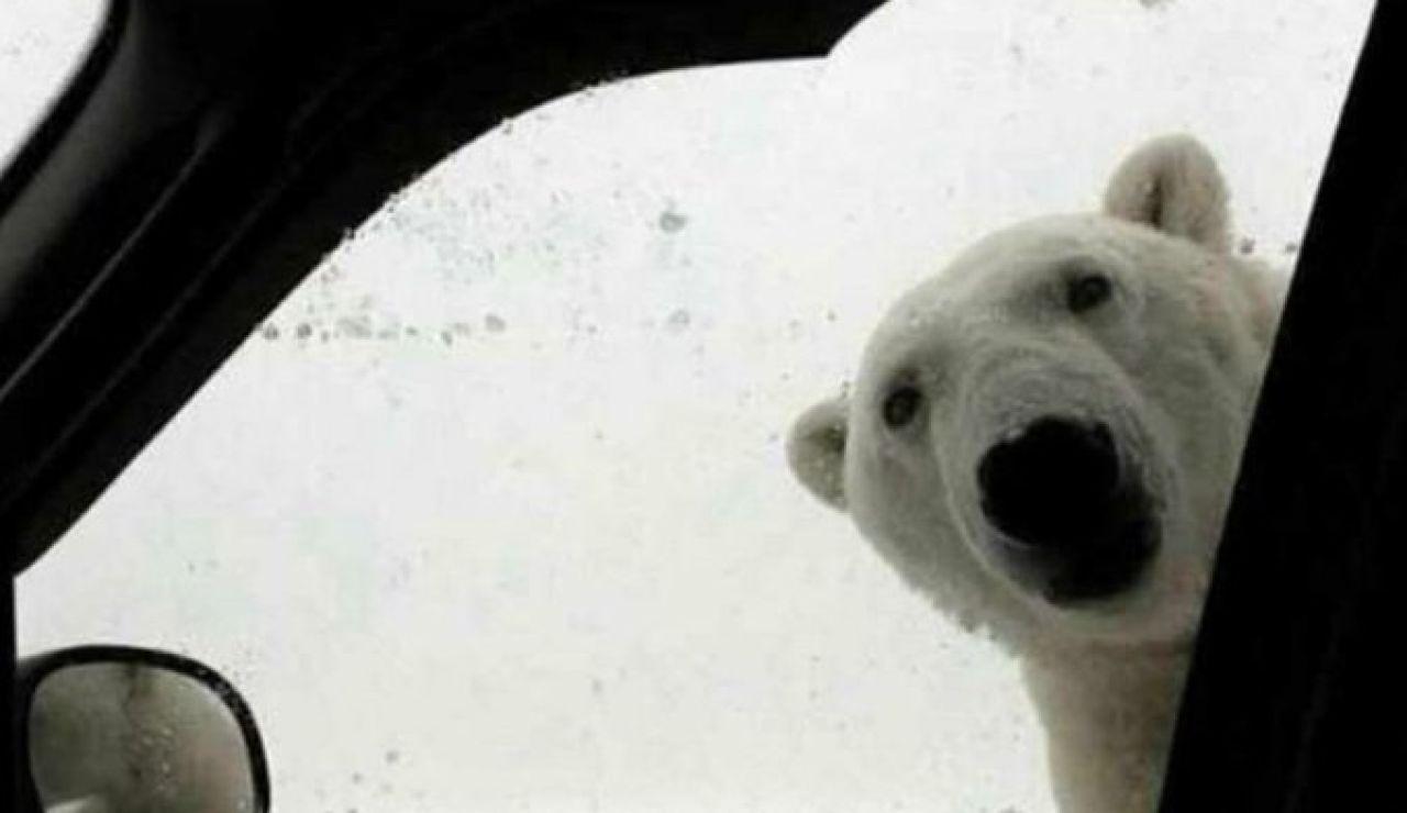 Los mejores memes del temporal de frío y nieve de Filomena en toda España