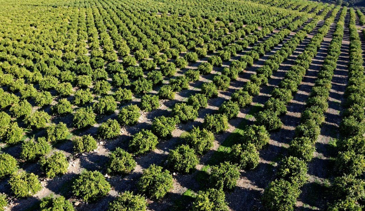 El bosque del limón europeo: ejemplo de sostenibilidad para el medioambiente
