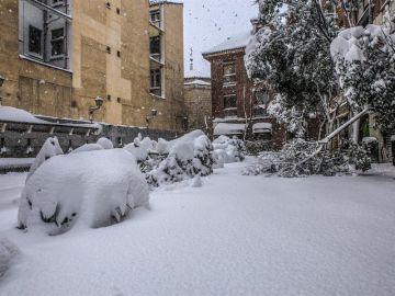 Ramas de árboles partidas por el peso de la nieve en la Plaza del Biombo, Madrid.