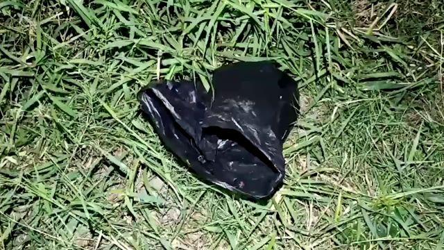 Escucha ruidos en una bolsa de basura tirada a un lago y se lleva la mayor sorpresa al mirar dentro