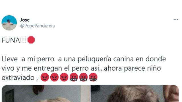 Tuit de @pepepandemia