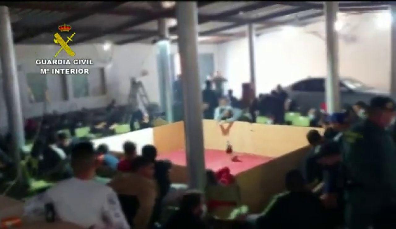 La Guardia Civil disuelve una pelea de gallos que concentraba a 89 personas con armas y drogas en El Ejido