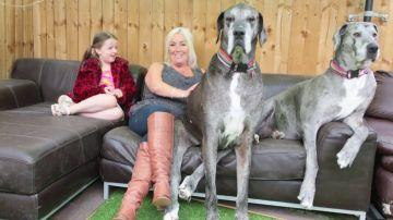 Muere a los 8 años y medio Freddy, el perro más alto del mundo
