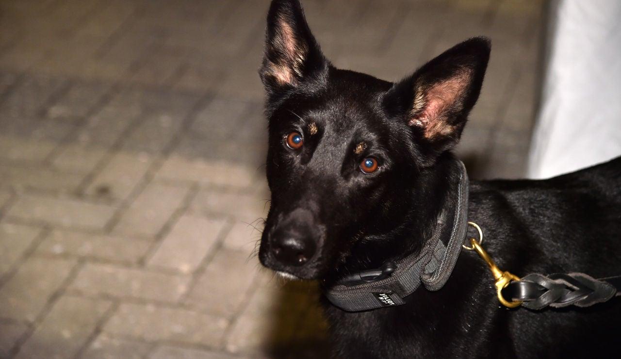 Los Miami Heat de la NBA usan perros que detectan el coronavirus para abrir su pabellón a los aficionados