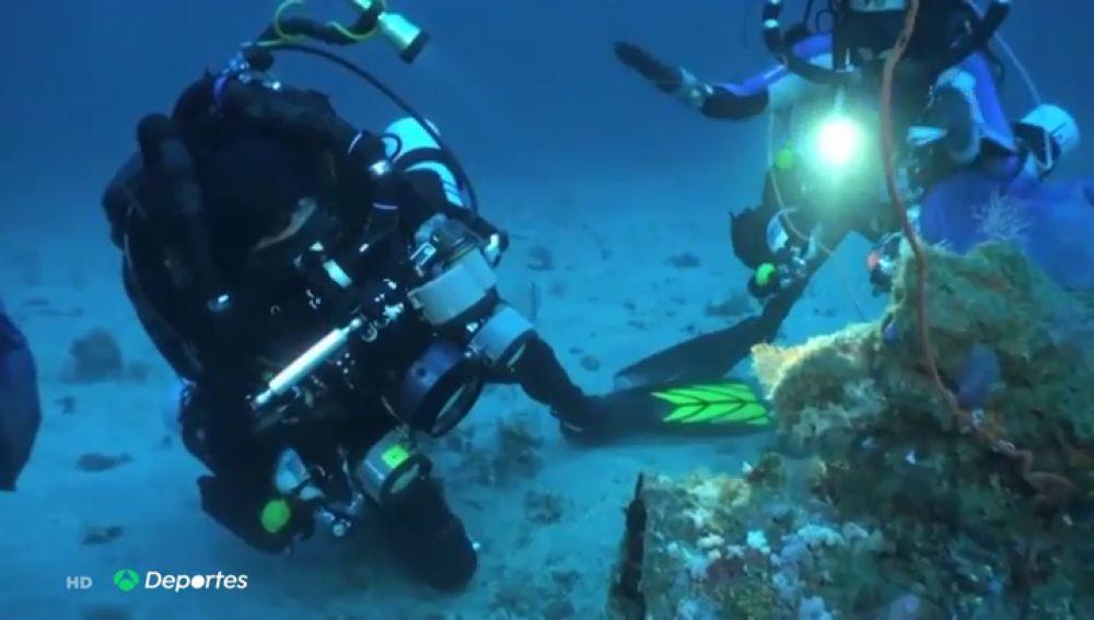 Un buzo descubre los secretos del ascidia, el animal marino clave para desarrollar el antiviral español contra el coronavirus