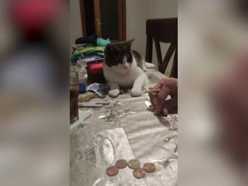 Un gato de Huelva sorprende a todos al darle la vuelta a una moneda sobre la mesa