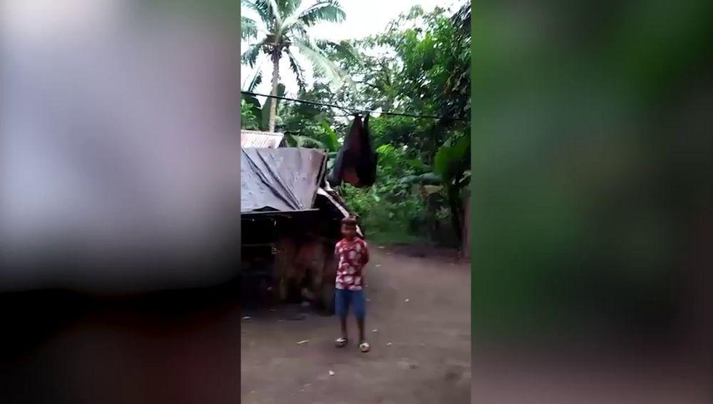 VÍDEO: Un niño rescata a un murciélago gigante y se convierten en mejores amigos