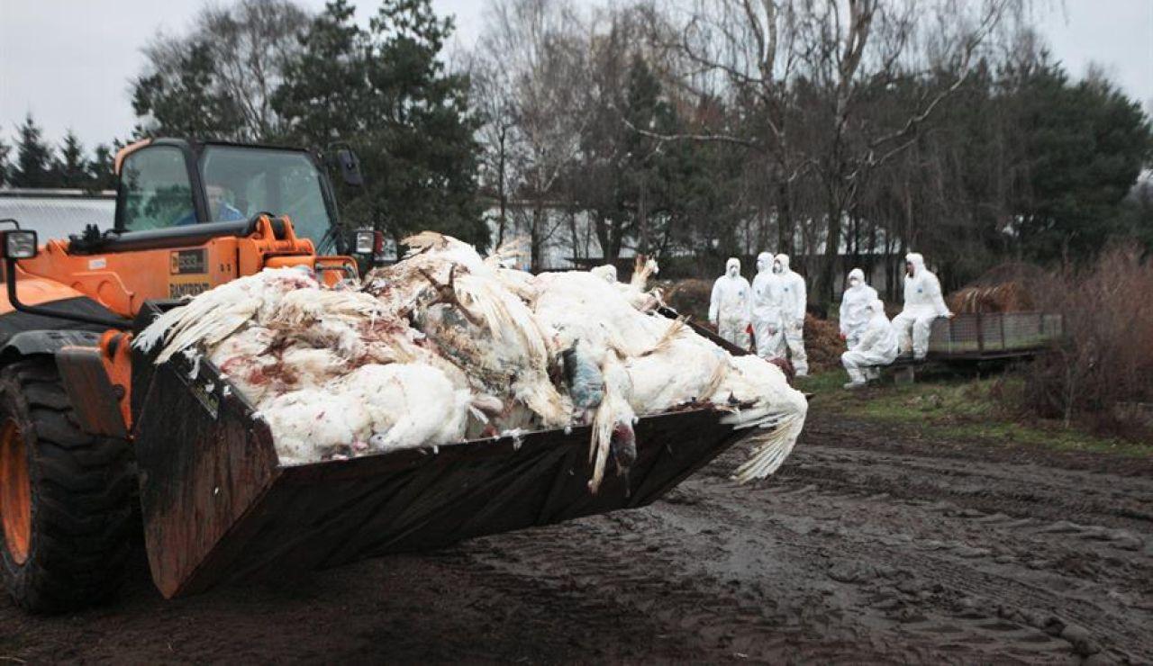Todo lo que sabemos de la gripe aviar H5N8 que Rusia acaba de detectar por primera vez en humanos