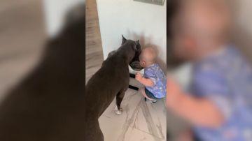 VÍDEO: Un bebé copia la forma de beber agua de su perro