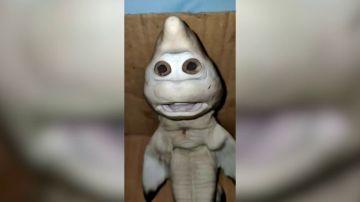 VÍDEO: Un tiburón bebé con rostro humano es capturado en Indonesia