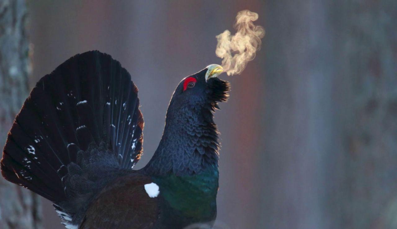 Las fotos de aves finalistas del FIO 2021