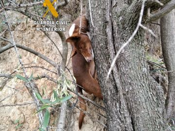 Detenidas 2 personas por ahorcar a un perro y tirarlo por un precipicio porque no servía para la caza en Málaga
