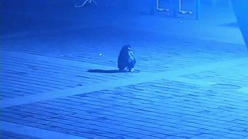 Un niño tira un petardo dentro de una alcantarilla y sale volando por los aires