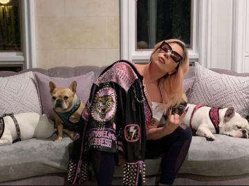 Lady Gaga posa junto a sus tres perros