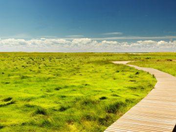 ¿Por qué se celebra el 3 de marzo el Día Mundial de la Vida Silvestre?